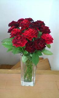 やっぱり薔薇好き!