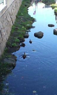 川には雁が・‥