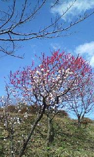 春到来(~o~)<br />  ♪