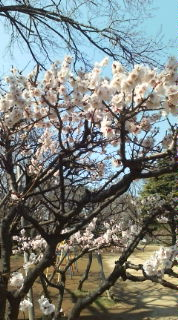 すっかり春だぁ〜
