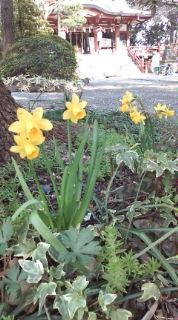 春はるハル(^-^)