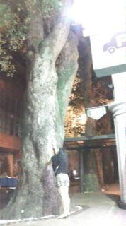 熊本の気(木)
