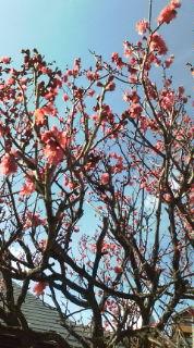 春が来る〜