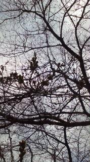 桜咲く頃!
